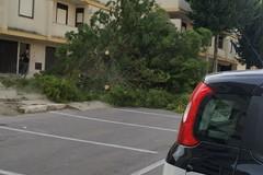 Albero pericolante nel quartiere San Valentino: l'intervento dei Vigili del Fuoco
