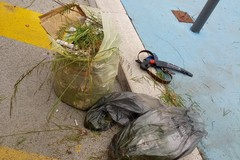"""Rifiuti e vegetazione incolta: due cittadini ripuliscono un'area verde della stazione """"Andria Sud"""""""