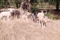 """Montaruli lancia l'idea di realizzare un """"Forum Animalista della Città di Andria"""" (FAA)"""