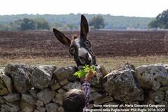 Puglia Rurale: ecco le foto premiate