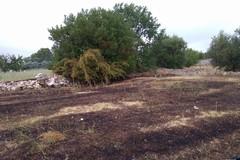 Incendio a pochi chilometri dal Castello: sul posto i Federiciani