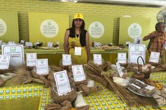 Aumento spropositato dal grano al pane, mentre salgono le importazioni dall'estero