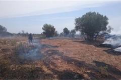 Campagna antincendio boschivo 2019: nella Bat già 90 gli interventi effettuati