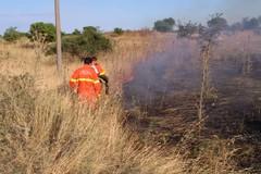 Incendio in Contrada Coleti a Minervino Murge, intervengono i Federiciani
