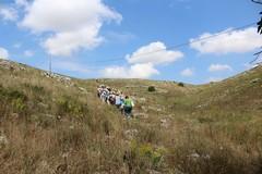 Parco dell'alta Murgia: Tarantini presidente, c'è l'ok di Camera e Senato