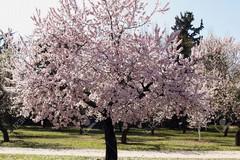 """Clima, Coldiretti Puglia: """"Quasi 5 gradi in più a marzo, la natura fiorisce"""""""