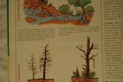 Pini ed eucalipti: mille ottime ragioni per non piantumarli