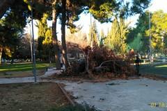 Forte vento: alberi abbattuti in villa comunale ed al quartiere San Valentino