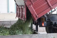 Bene l'export per i prodotti dell'agroalimentare pugliese. In calo solo l'olio d'oliva