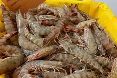 L'export dell'agroalimentare pugliese traina la ripresa economica