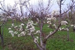Meteo: tra 48 ore termina la finta primavera, a seguire temperature in picchiata sulla Puglia