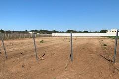 Numerosi furti di bestiame e macchine agricole sulla Murgia, servono controlli