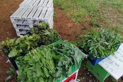 """La scuola """"Verdi-Cafaro"""" dona il raccolto dell'orto scolastico al Banco alimentare della vicina parrocchia"""