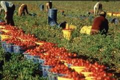 Lavoro straniero in agricoltura: oltre 39 mila quelli occupati in Puglia