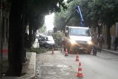 Disseccamenti degli alberi presenti in numerose strade cittadine: Fratelli d'Italia chiede interventi urgenti