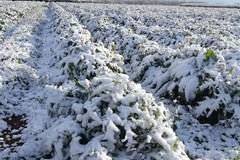 Gelata campi marzo 2018: un milione e mezzo al Comune di Andria per gli indennizzi agli agricoltori