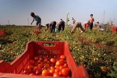 """Movimento Idea: """"L'agricoltura pugliese non è mai stata priorità del governo regionale"""""""