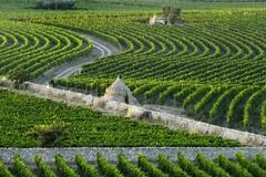 Agricoltura, maggiorate del 50% le concessioni di carburante