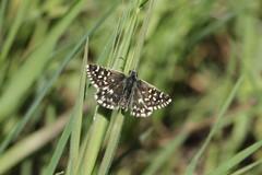 """""""Alta Murgia: un Parco per api e farfalle"""": le attività progettuali hanno rilevato oltre 80 specie, tra cui alcune rare"""