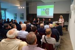 Tra xylella e gelate: quale futuro per l'olivicoltura pugliese