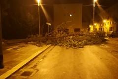 Cade un albero in via Monopoli, paura in strada