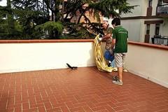 Uno scoiattolo sulla veranda: scatta l'SOS. Intervento dei Federiciani in viale Gramsci