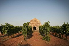 Campagna vitivinicola 2018: convalida documenti in formato elettronico