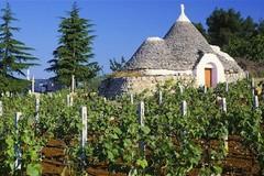 """Crisi vitivinicola, Cia: """"La Regione integri i fondi per la distillazione"""""""