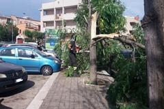 Intervento dei Vigili del Fuoco da Corato per pericolo caduta alberi in via Carpaccio