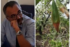 "Calamità per l'agricoltura: l'ass. Matera ignorava la ""lesa maestà"""