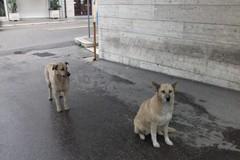 Andria: i cani attendono da circa due settimane la loro padrona fuori dall'ospedale in cui è ricoverata