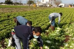 Crisi economica da covid 19: agricoltura soffre ma tiene occupazione (+2,3%) e tira all'estero (+26,5%)