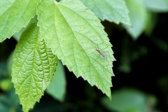 Zanzare, addio a fastidiose punture: arriva la disinfestazione