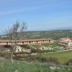Parchi in Puglia: manutenzione e riforestazione, siglato protocollo