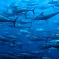Pesce e mercurio