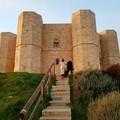 Concessione della gestione del Bosco Finizio e della Pineta di Castel del Monte: pubblicato bando di gara
