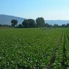 Braccia allevate per l'agricoltura