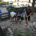 Un bell'esempio di amministrazione condivisa: la cura dei giardinetti di piazzale Giuseppe Colasanto