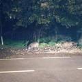 Lupi e cinghiali, oltre 11 mln di euro per danni a fauna selvatica