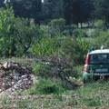 Puglia al terzo posto per infiltrazione criminale in agricoltura: la Bat cresce dell'1,27%