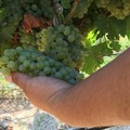 Contratto Collettivo Provinciale di Lavoro per gli operai agricoli e florovivaisti, assemblea ad Andria