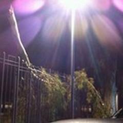 Grosso ramo caduto in Villa: spavento tra i passanti