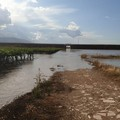 """Puglia: estate disastrosa per l'agricoltura, la CIA chiede lo """"stato di calamità"""""""