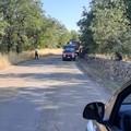A fuoco alcuni ettari di quercia in contrada Sant'Agostino