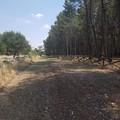 Quando la Puglia siticulosa e ventosa, perse i boschi a ...favore della transumanza!
