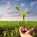 Giovani in agricoltura: pubblicato bando per il primo insediamento