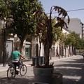 """Il CO.ADO. sul centro cittadino: """"Corso Cavour, questo è il salotto di Andria? """""""