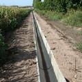 Contrasto alla xylella: Lavori di pulizia e manutenzione dei canali affidati alle aziende agricole
