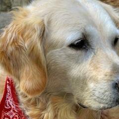Torna la gara d'appalto per 300 posti di ricovero per i cani randagi