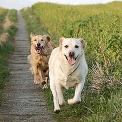 Oipa Andria: Un banchetto per raccogliere fondi in favore dei cani e gatti randagi